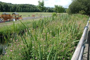 02.-After-balsam-clearance-on-the-Rye-Aug-2013-600.jpg