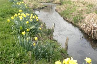 A more natural river bank